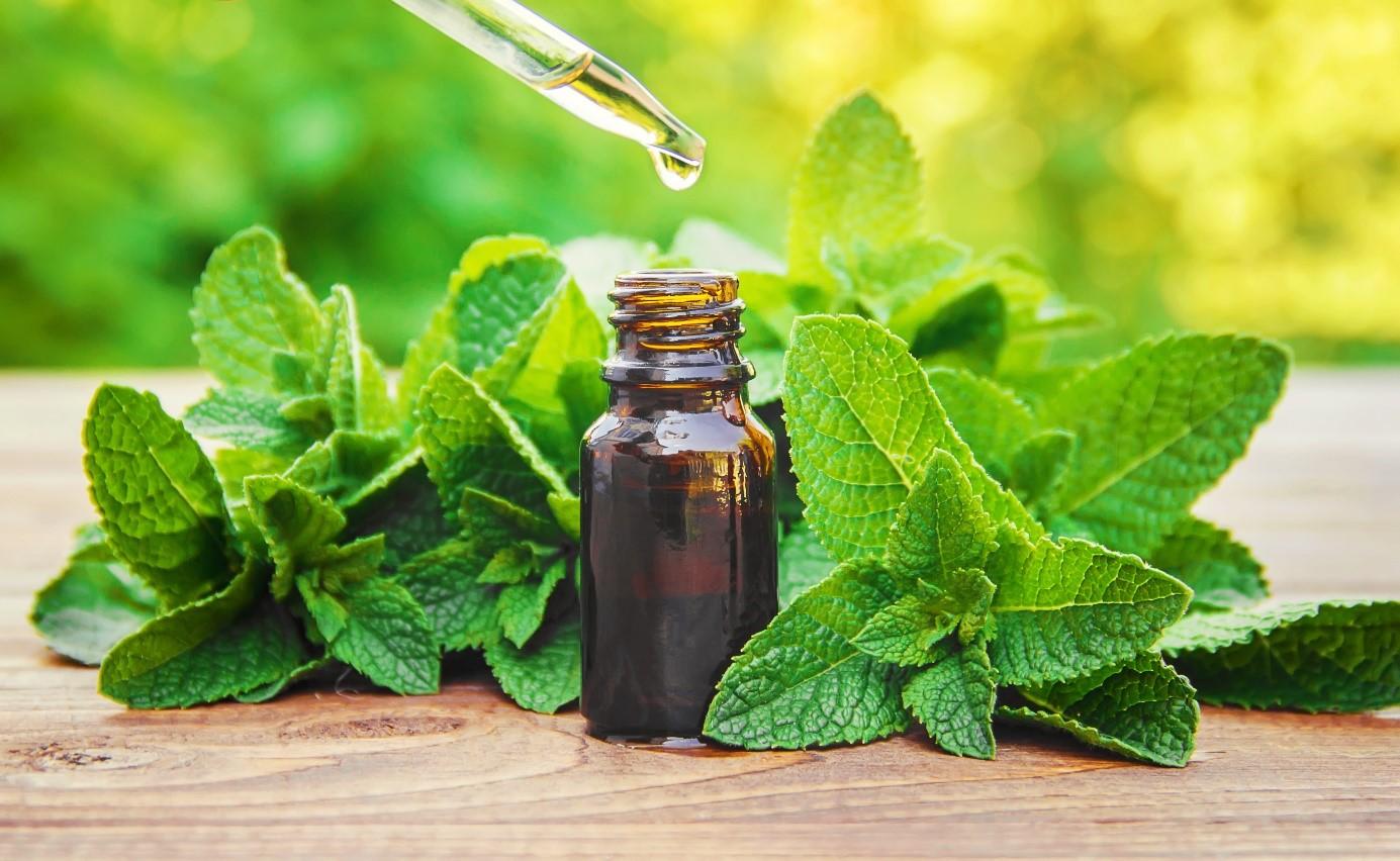 Menthol-Verbot: Öl aus Minze